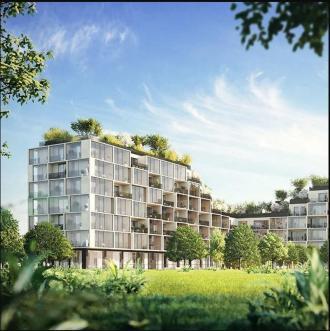 Het hoogste bos van Antwerpen - 2de verblijf in een stad - 2HB