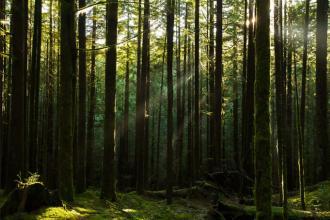 Tiny Forest-project Vorst - 2de verblijf in een stad - 2HB